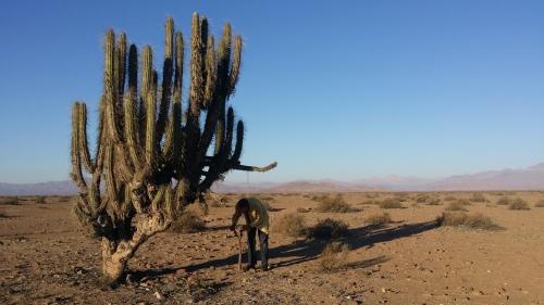 desierto-carretera-panamericana-norte-de-chile