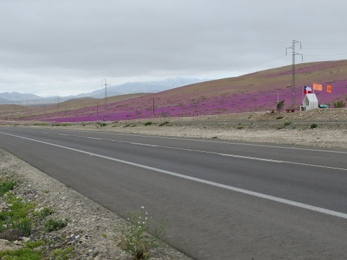 panamericana-desierto-florido-norte-chico